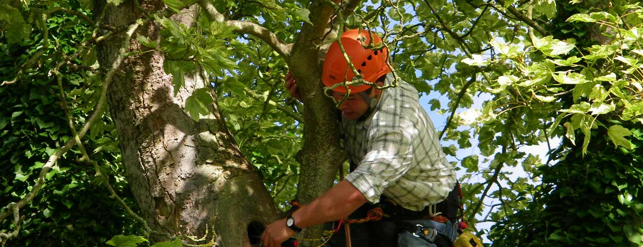 Tree Survey and Inspection-single trees or many hundreds of trees