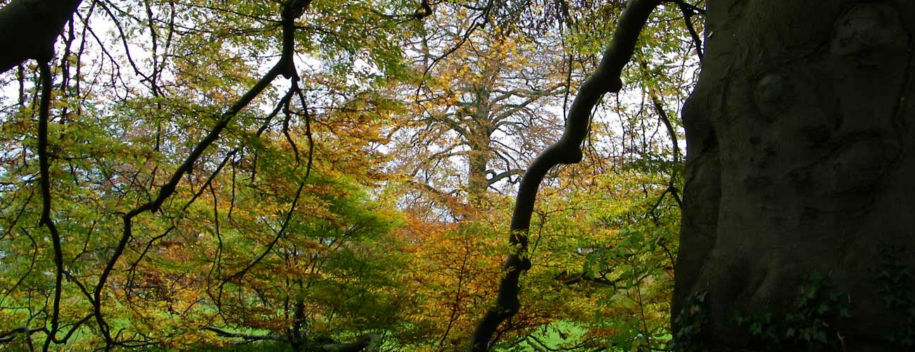 Trees and tree habitats are integral parts of ecological assessments